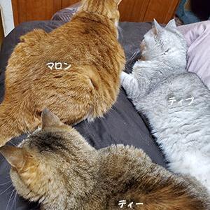 猫団子とマットレス