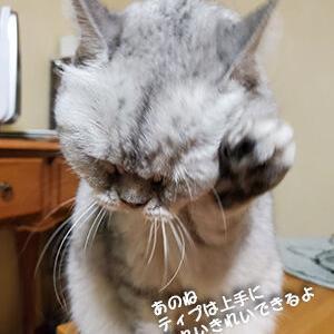 猫への涙、犬への涙
