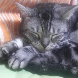 ボス猫が逝って1年経ちました