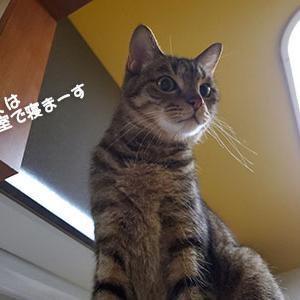 勘違いした猫
