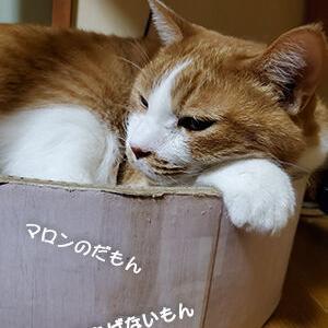 猫だってストレスがたまる
