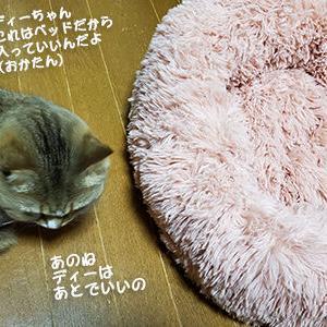 猫ベッドその後