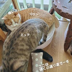 重い猫と腱鞘炎の因果関係