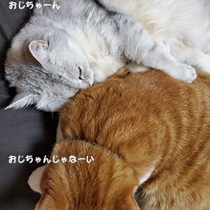 「とっても」微笑ましい猫