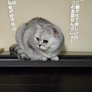 楽器もこれ以上壊さないでほしい猫