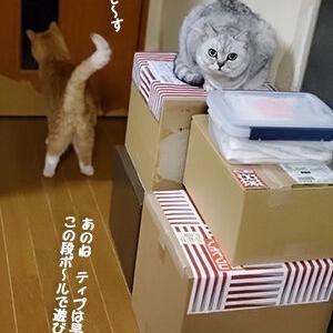 猫はだいたい無視をする