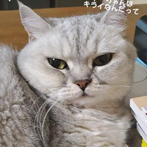 猫には足をつらないでほしいと願う