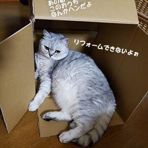 トロいのにいつの間にかダイエットできちゃった猫