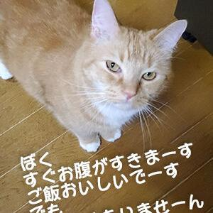 食べたいけれど太りたくない猫