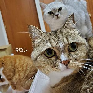 7月生まれの猫たち