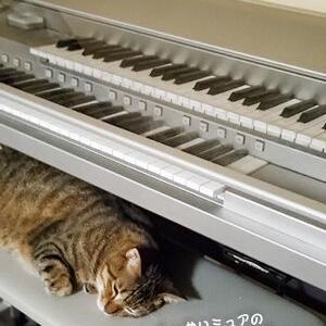 猫と音楽とともに