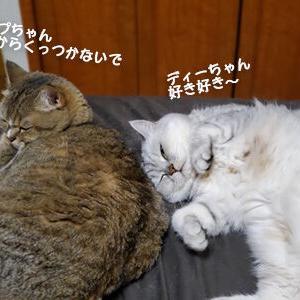 ほのぼの双子猫