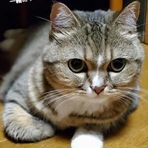 一緒にダイエットしてくれる猫