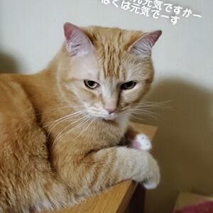 猫のパワーをもらいましょう