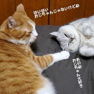 猫は床暖にお腹をつける