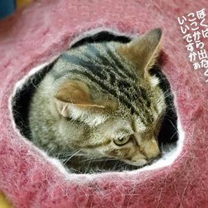 末っ子猫にとってのフェルトベッドと膝の上