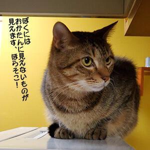 猫には床暖がみえる