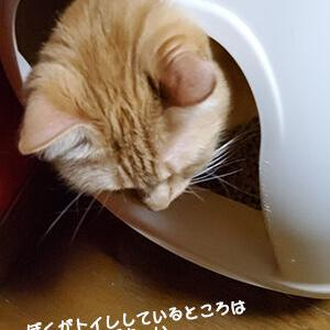 猫のビクビクとナデナデの因果関係