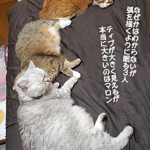 猫は、ぬくぬく