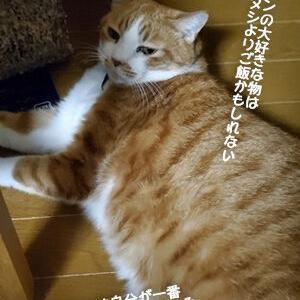 さみしがりやの巨体猫の好きなもの