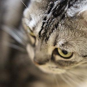 亡くなった母、そして亡くなった女ボス猫
