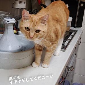 どちらにも好かれるメタボ猫