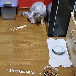 猫が踵を返す理由