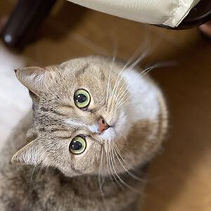 賢い猫はお留守番もできる