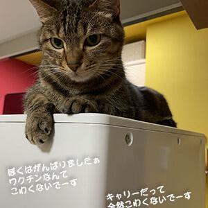 ワクチンに連れて行かれた猫
