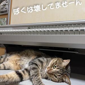 猫がさんざん遊んだSTAGEA