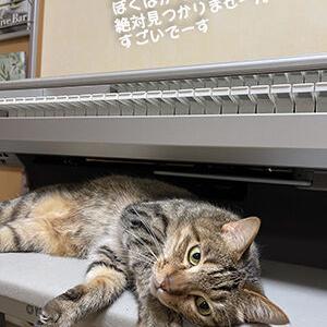 こんなに暑いのに寒がる猫