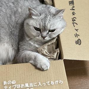 がんばったらしい猫 (温泉篇)