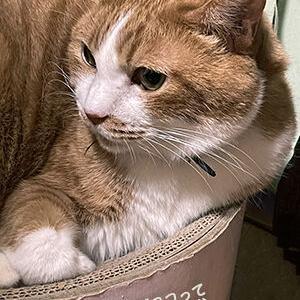 猫のナデナデとナタデココの違い