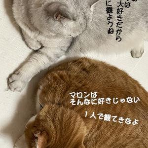 猫が邪魔をする