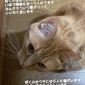 猫の自覚 (家族篇)