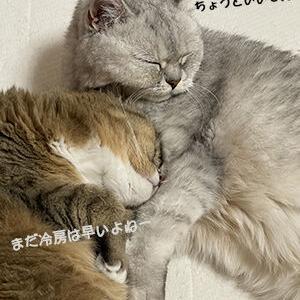暑がり猫と寒がり猫
