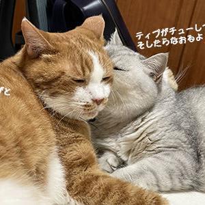 猫だって治すのは優しい心で