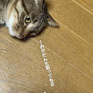 本気の猫には本気で返す