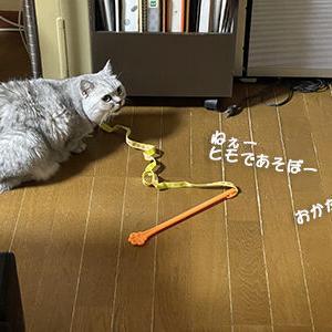 猫は、すごい速さで遊んだけれど