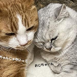 ちゃんと通じた猫の愛