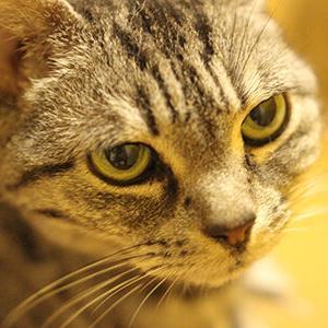 7月猫の誕生日はみんな同じ日
