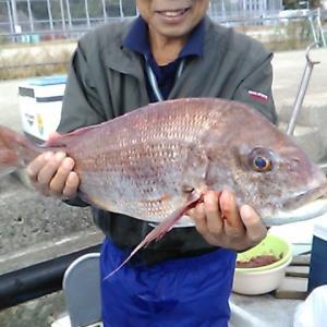 沼島の真鯛釣りシーズン開幕!!