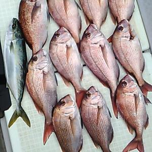 沼島の釣り船 真鯛釣果報告 2020.01
