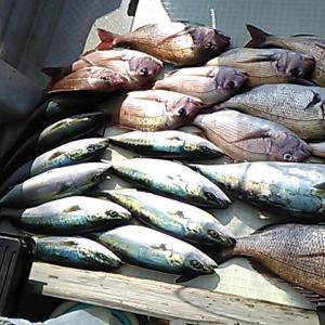 そう、その日は真鯛爆釣だったのです。