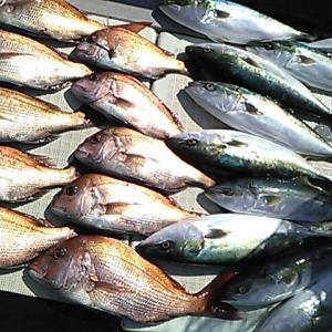 淡路島沼島の船釣り 2021.02 まだまだ真鯛が狙える!
