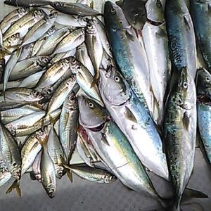 淡路島沼島の海釣り 2021.09 第2週の釣果