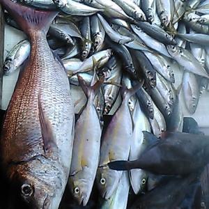 沼島の釣り船 釣果報告