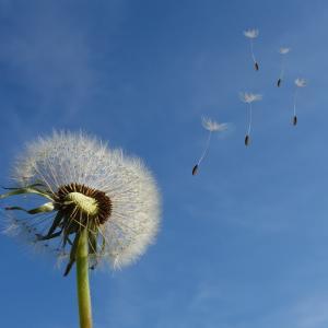 今は「風の時代」へ変わる前の革命期かもしれません