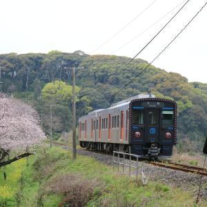 長崎本線旧線 桜とYC-1系