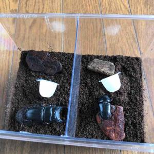 オオクワガタの産卵セット。結果は、、、
